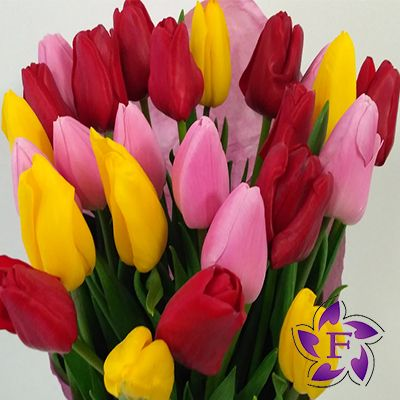 Buy tulips in a box