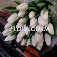 Bouquet of 29 white tulips - Photo 1