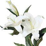 Лилии - цветы и букеты на flora.od.ua