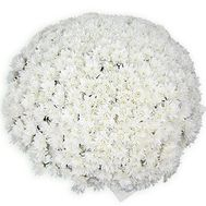 """101 white chrysanthemum"" in the online flower shop flora.od.ua"