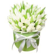 51 белый тюльпан в коробке - цветы и букеты на flora.od.ua