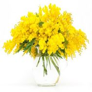 """9 branches of mimosa"" in the online flower shop flora.od.ua"