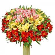 Large bouquet of 101 alstroemerias - flowers and bouquets on flora.od.ua
