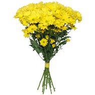 Букет 9 ромашковых хризантем - цветы и букеты на flora.od.ua
