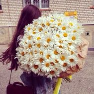 Bouquet of 101 chamomile flowers - flowers and bouquets on flora.od.ua
