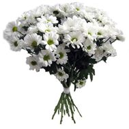 Bouquet from 11 chamomile chrysanthemums - flowers and bouquets on flora.od.ua