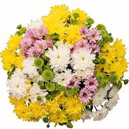 Bouquet of 17 chrysanthemums - flowers and bouquets on flora.od.ua