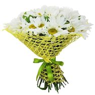 Bouquet of 25 chamomiles - flowers and bouquets on flora.od.ua