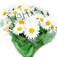 Bouquet of 25 chamomile flowers - flowers and bouquets on flora.od.ua
