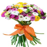 Bouquet of 65 Ranuncles - flowers and bouquets on flora.od.ua