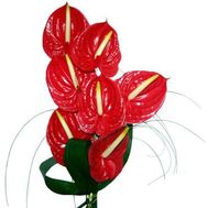 """Bouquet of 7 anthuriums"" in the online flower shop flora.od.ua"
