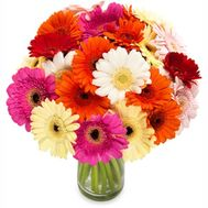 Gerbera bouquet - flowers and bouquets on flora.od.ua