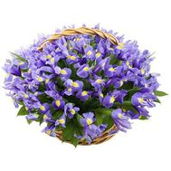 Basket of 51 irises - flowers and bouquets on flora.od.ua