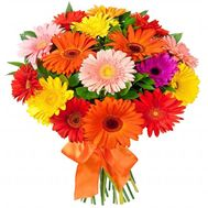Beautiful Gerberas - flowers and bouquets on flora.od.ua