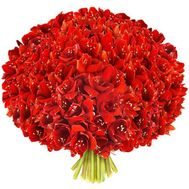 """A huge bouquet of amaryllis"" in the online flower shop flora.od.ua"