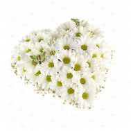 """Heart of 15 chamomile chrysanthemums"" in the online flower shop flora.od.ua"