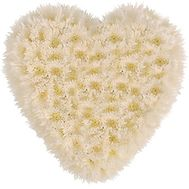 Heart of 25 Chrysanthemums - flowers and bouquets on flora.od.ua