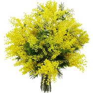 """11 branches of mimosa"" in the online flower shop flora.od.ua"