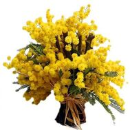 """Bouquet of mimosa"" in the online flower shop flora.od.ua"