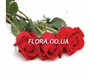 """3 imported roses"" in the online flower shop flora.od.ua"