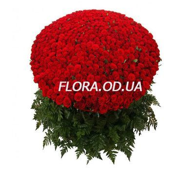 """501 red roses 70 cm"" in the online flower shop flora.od.ua"