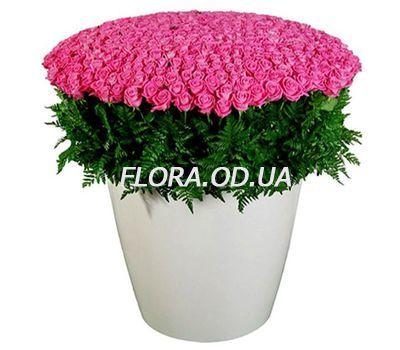 """""""501 pink roses 60 cm"""" in the online flower shop flora.od.ua"""