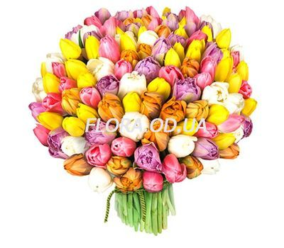 """Bouquet of 151 Tulips"" in the online flower shop flora.od.ua"