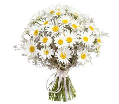 """Bouquet of 39 chamomiles"" in the online flower shop flora.od.ua"