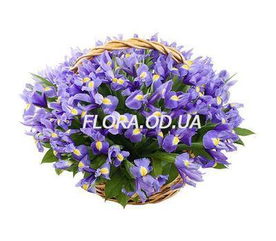 """""""Basket of 51 irises"""" in the online flower shop flora.od.ua"""