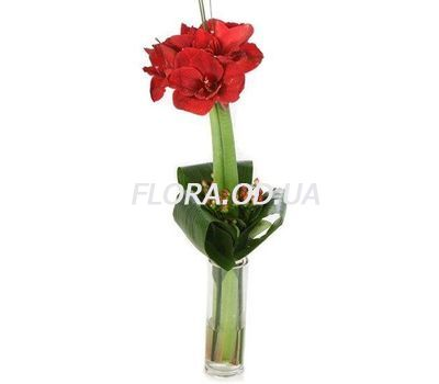 """Male bouquet from amaryllis"" in the online flower shop flora.od.ua"