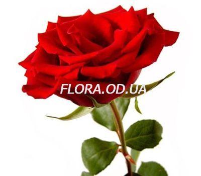 """Week of roses №1"" in the online flower shop flora.od.ua"