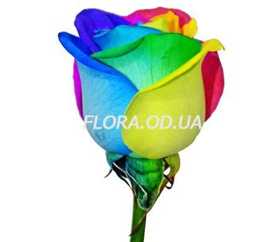 """Rainbow roses"" in the online flower shop flora.od.ua"