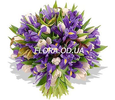"""""""51 tulips and iris"""" in the online flower shop flora.od.ua"""